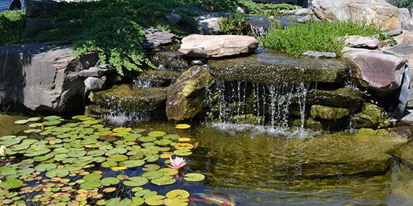 Pond with waterfall, large flat stone, lily pads